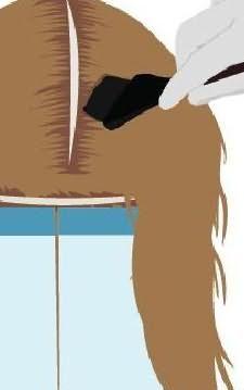 3d окрашивание волос технология 4