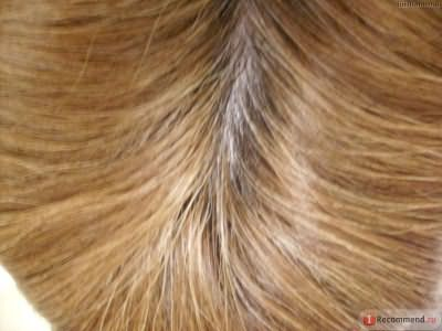 Краска для волос L'OREAL Sublime mousse by Casting фото