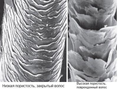 Разница между здоровым и поврежденным волосом