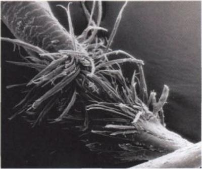 В результате механического повреждения волосы могут обламываться по всей их длине.