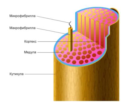 Фото структуры волос