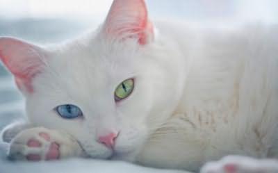 глаза необычного цвета фото