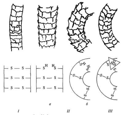 Действие химической завивки: раскрытие чешуек, образование двусернистых связей оседанием водорода.