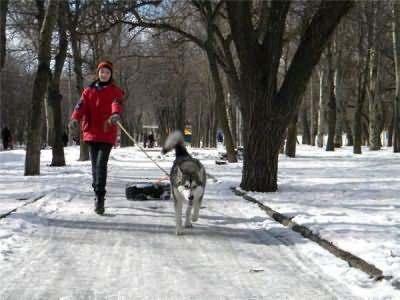 Свежий воздух и движение – отличная поддержка для иммунитета