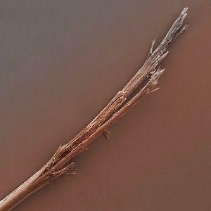 Расслоение волоса по длине