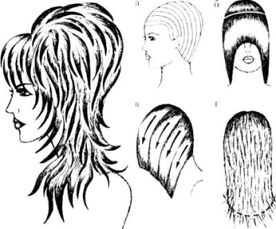 На схеме видны особенности стрижки рапсодия.