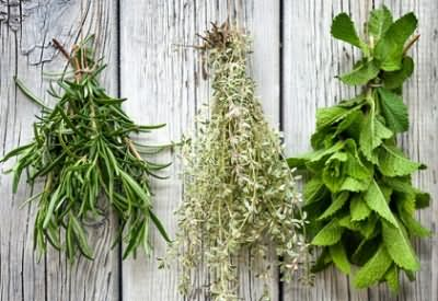Отвар готовят из свежих и сухих трав, которые продают в аптеке (цена от 22 до 350 рублей)