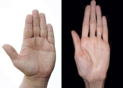 длина пальцев на руках, значение